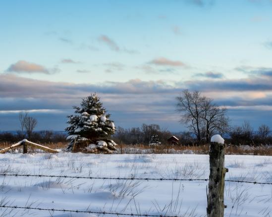 Winter WonderlandNikon D5100, Nikkor 55-200mm f/4-5.6, 1/25s, 55mm, f/18, ISO 200