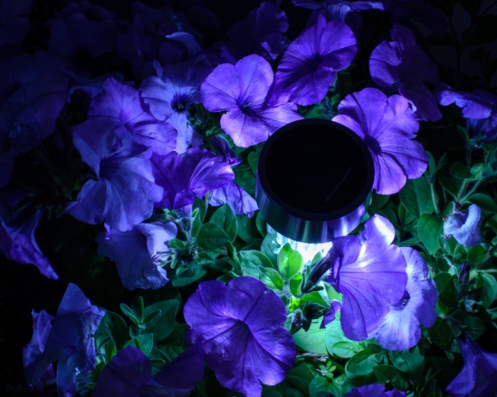 Night Light Nikon D5100, Nikkor 35mm f/1.8, 30s, f/16, ISO 400