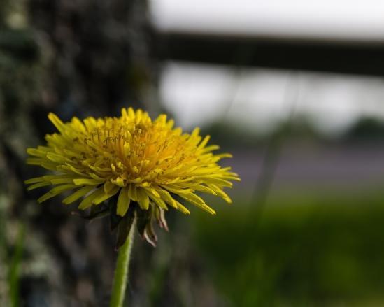A Yard with a View Nikon D5100, Sigma 17-70mm f/2.8-4, 1/500s, 70mm, f/8, ISO 200