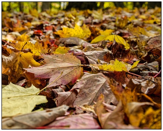Colors - The Fallen Nikon D5100, Nikkor 24-85mm f/3.5-4.5, 1/160s, 24mm, f/5.6, ISO 200