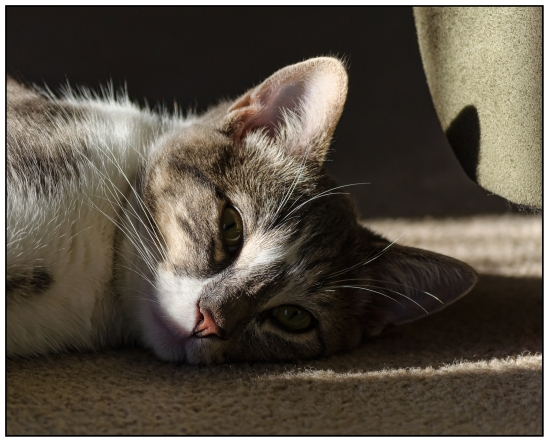 Sleepy Oliver Nikon D5100, Nikkor 55-200mm f/4-5.6, 1/400s, 105mm, f/5.6, ISO 400