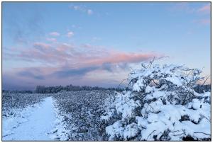 Winter Path Nikon D5100, Sigma 17-70mm f/2.8-4, 1/80s, 17mm, f/8, ISO 400