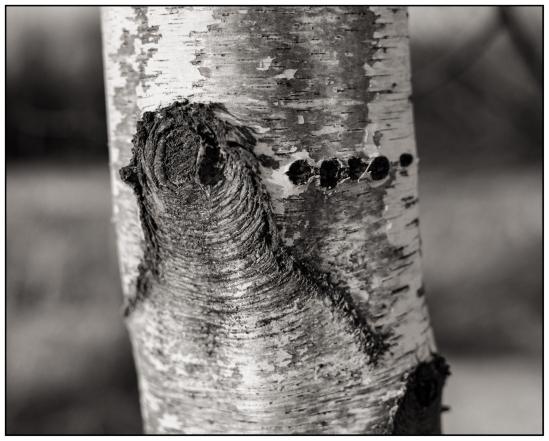 Morse Code? Nikon D5100, Nikkor 35mm f/1.8, 1/500s, f/2.8, ISO 100