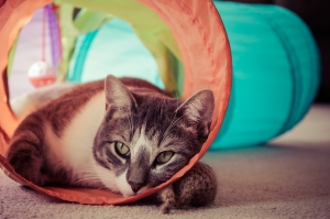 Just leave me to my tunnel... Nikon D7100, Nikkor 24-85mm f/3.5-4.5, 1/100s, 58mm, f/4.5, ISO 720
