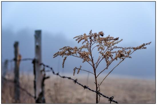 Post, Post, Plant 2 Nikon D5100, Sigma 17-70mm f/2.8-4, 1/13s, 42mm, f/4, ISO 800