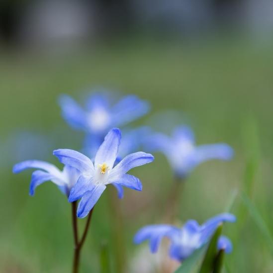 Fresh Blossoms Nikon D7100, Nikkor 24-85mm f/3.5-4.5, 1/100s, 85mm, f/4.5, ISO 200