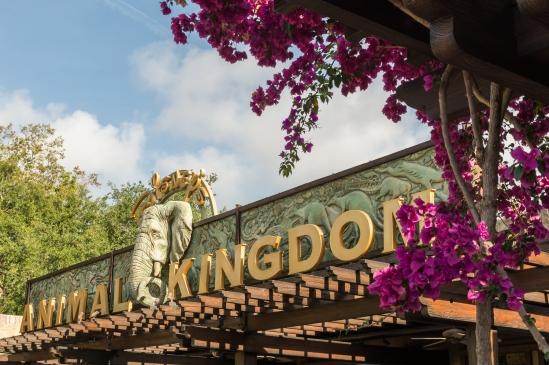 Animal Kingdom Nikon D7100, Sigma 17-70mm f/2.8-4, 1/320s, 32mm, f/8, ISO 200